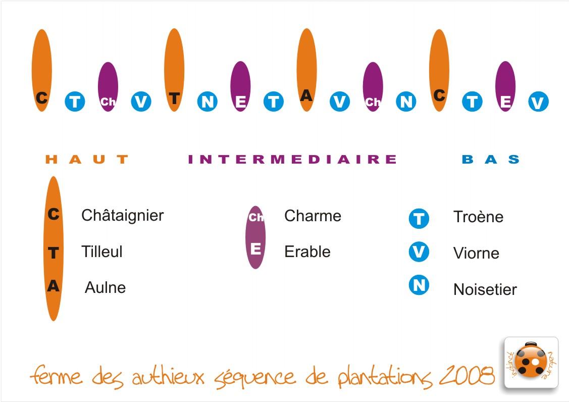 squenceessenceshaie20081.jpg