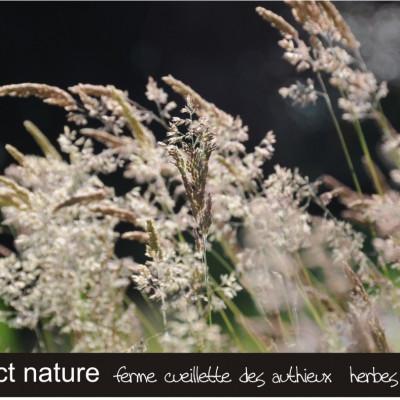 image nature fond d'écran  ferme cueillette des authieux herbes sauvages