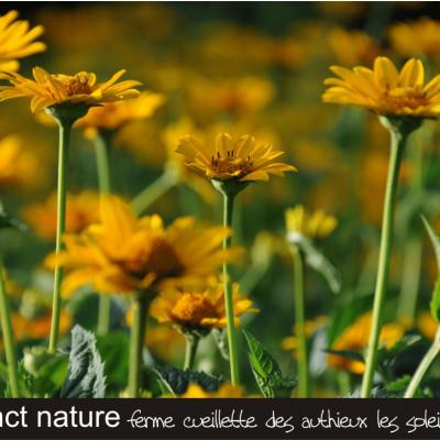 ferme cueillette des authieux cueillir des fleurs les soleils et chardons