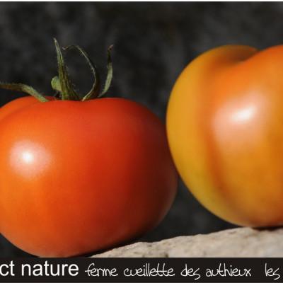 fonds d'écran aux couleurs des tomates ferme cueillette des authieux