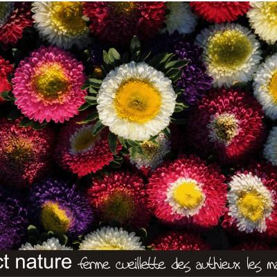 fond d'écran les fleurs les marguerites