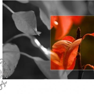 ferme des authieux bourgeons de poiriers