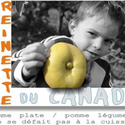 canada la pomme des cuisiniers