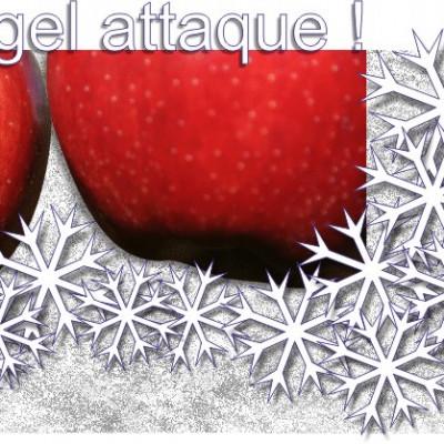 les pommes sont-elles sensibles au gel ? ferme cueillette des authieux