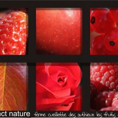 fonds d'écran aux couleurs des fruits de l'été ferme cueillette des authieux
