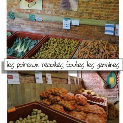 les légumes cueillis au marché de la ferme des authieux