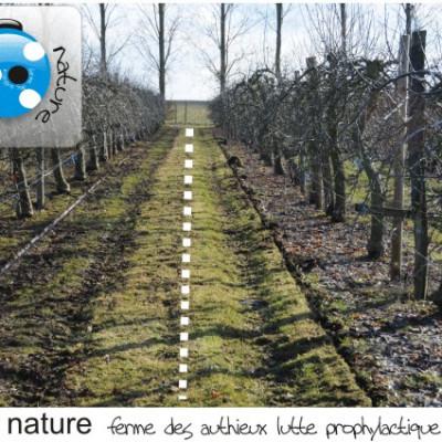 lutte prophylactique contre la tavelure :balayage,élimination des feuilles au verger cueillette
