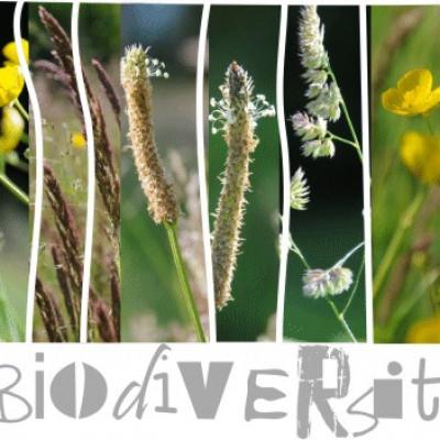 Laissons s'exprimer la biodiversité au verger de la cueillette des authieux