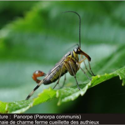 Reconnaître les insectes sur la cueillette de la ferme des authieux