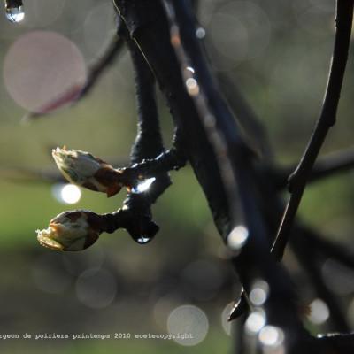 printemps 2011 à la ferme cueillette des authieux images pour fond d'écran