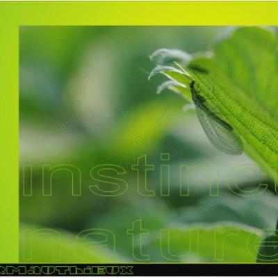 lutte écologique contre les pucerons verts du fraisier par lachers de larves de chrysopes ferme cueillette des authieux