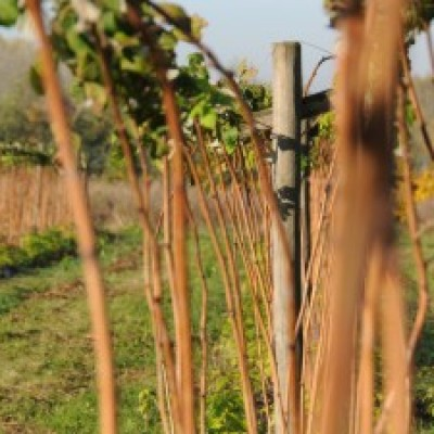 la bonne affaire ! savoir-faire et framboises remontantes ferme cueillette des authieux