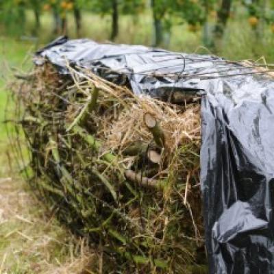 L'hivernage des insectes auxiliaires adultes ,haies,jachères et essai de paillage :ferme cueillette des Authieux
