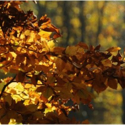 sortons du gris, prenons les couleurs de la nature plein les yeux, ferme des authieux ,couleurs d'automne