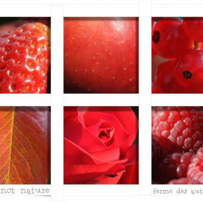 cueillir des pommes des fraises,video sortie à la ferme cueillette des authieux