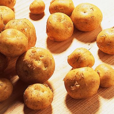 Pommes de terre de Noirmoutier à la ferme des Authieux